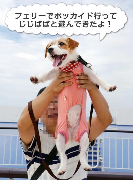 新日本海フェリーで菊と北海道 その1