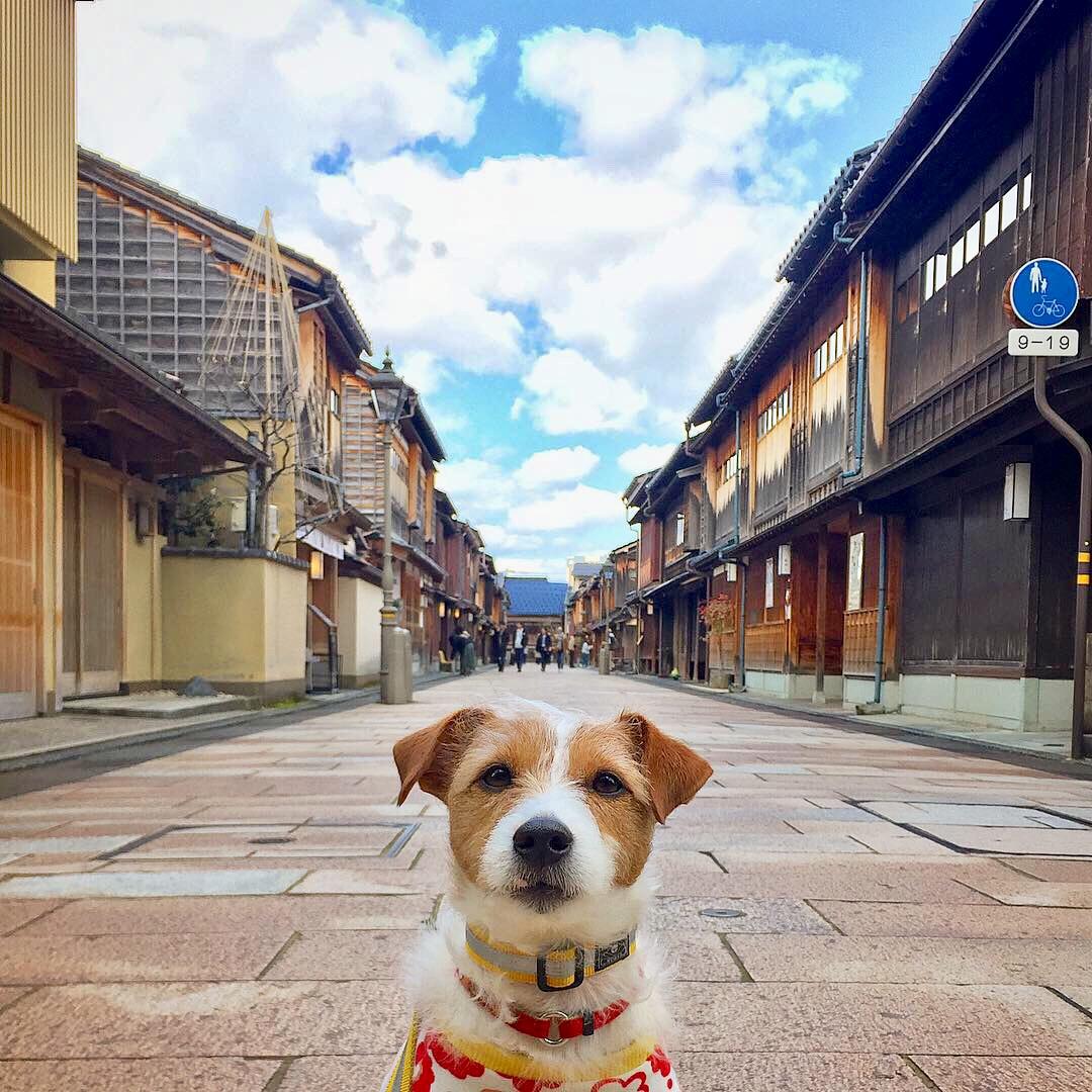 東茶屋街と犬